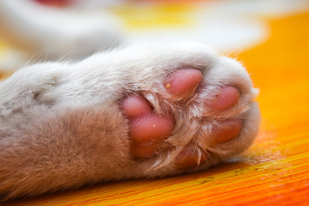 retractable: Cats paws Stock Photo