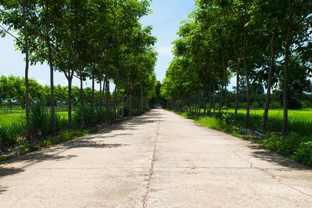 road near rubber trees