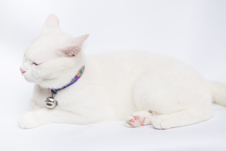 cutouts: white cat on white background