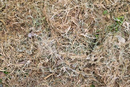 dried grass background texture Stock Photo