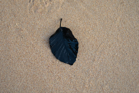 black leaf on sand beach