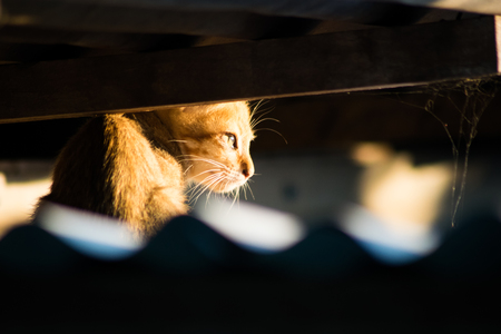 little cat under the roof,photo shoot Stock Photo