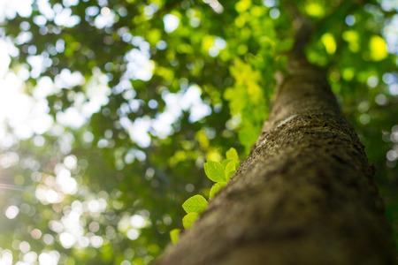 green leaves on green tree background Reklamní fotografie
