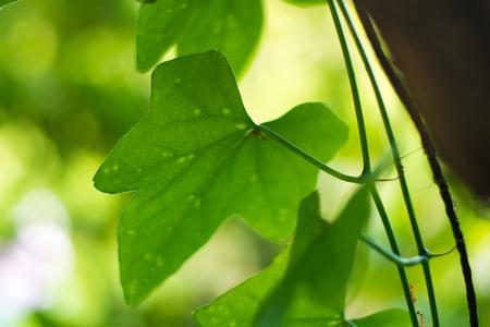 green leaves tree background Reklamní fotografie