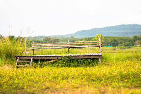 landscape of wooden chair on yellow flower field