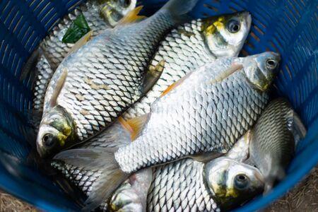 fresh fish background from fisher man Reklamní fotografie