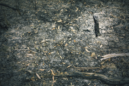 Forest fires was extinguished Debris and ashes Which cause global warming low light picture.