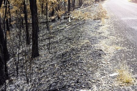 road and Forest fires was extinguished Debris  and ashes Which cause global warming. Stock Photo