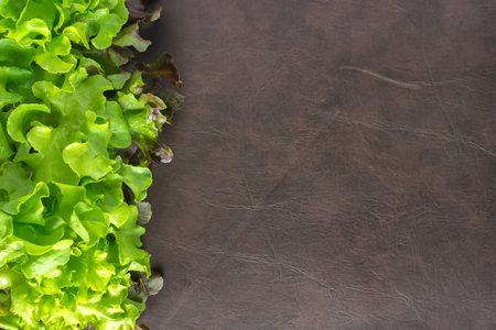 Top view of Green Oak Lettuce with Space for text. Health Concept. Foto de archivo