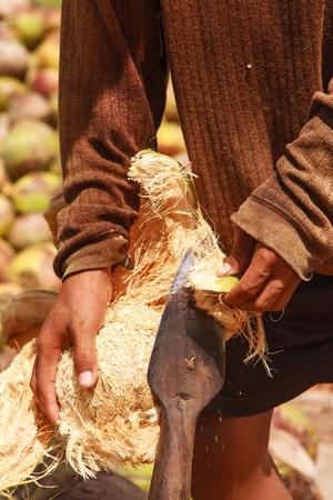 Islanders are peeled coconut Stock Photo - 12948583