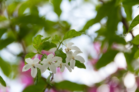 moke flowers
