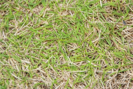 Surface of Grass