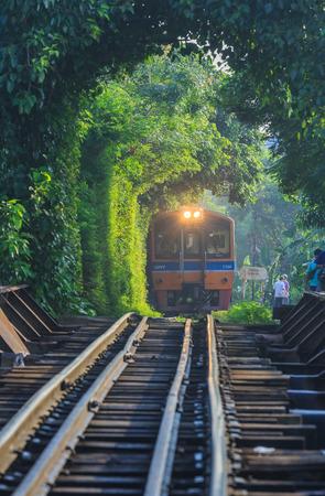 Bangkok,Thailand-Nov 14, The train runs through a tunnel of trees in the morning on Nov 14,2015. Publikacyjne