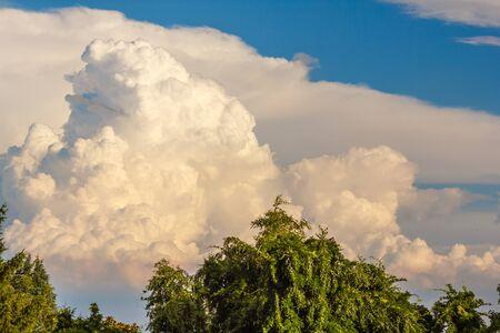 나무 모양의 구름이 푸른 나무와 비슷하게 생겼다.