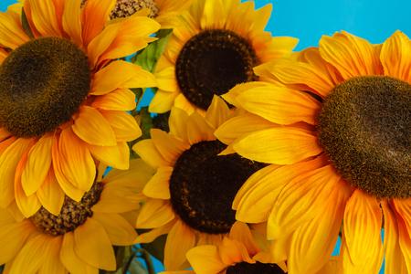 a set of flowered sunflowers in a jaR Фото со стока