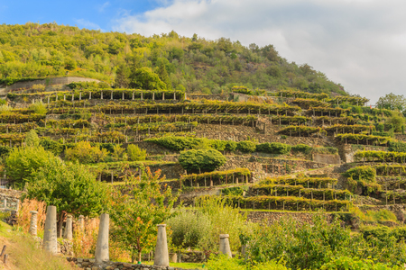 the slopes hilly  have been terraced  with the construction of dry stone supporting walls on which the pylons rise with  vineyards