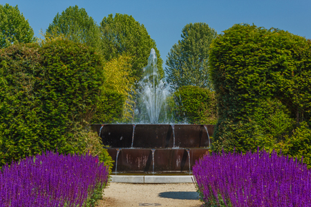 through a corridor of flowered sage flowers you get to a dancing fountain