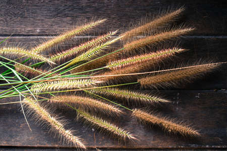 unwanted flora: Grass on old wooden Stock Photo