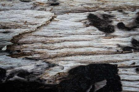 stratification: wood burned