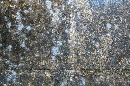 Texture of grey wall with mold and lichen photo
