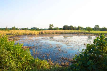swamp: swamp  landscape