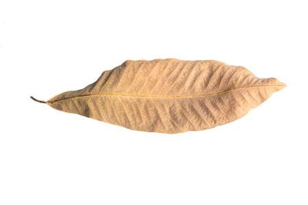 hoja seca sobre fondo blanco
