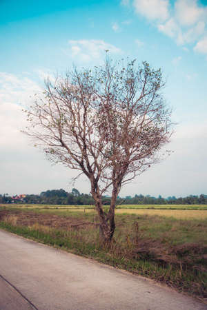 without: tree without leaves