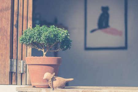 plantando arbol: Poco plantación de árboles verdes en macetas Decoración en estantes