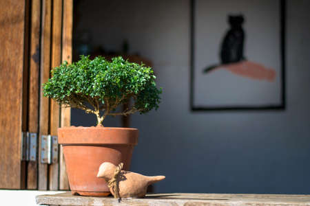 plantando arbol: Poco plantaci�n de �rboles verdes en macetas Decoraci�n en estantes