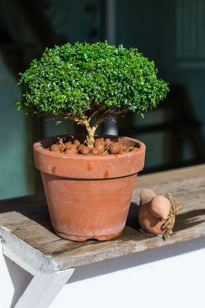 plantar árbol: Poco plantaci�n de �rboles verdes en macetas Decoraci�n en estantes