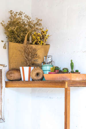 flores secas: Cactus and dried flowers decorating decoration on shelves