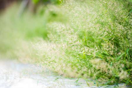 Flower grass blur background Stock Photo