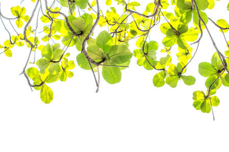 leaves on white background Stock Photo - 103598729