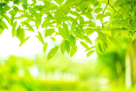 Green Leaves Background Stock Photo - 106910987
