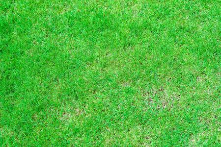 green grass texture background. Stock Photo - 110120951