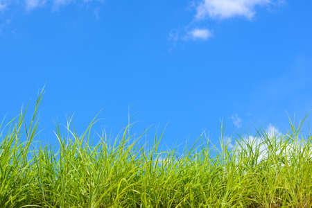 green grass under  blue sky and eco environmentally friendly concepts