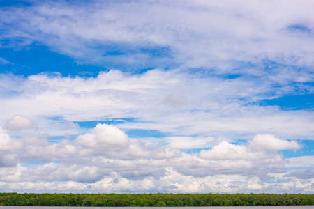 Mangrove forest with sky full of clouds