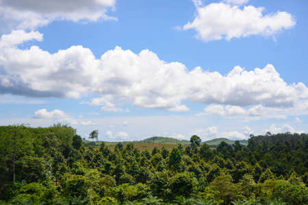 the landscape of forest , green environment Stock Photo - 110121386