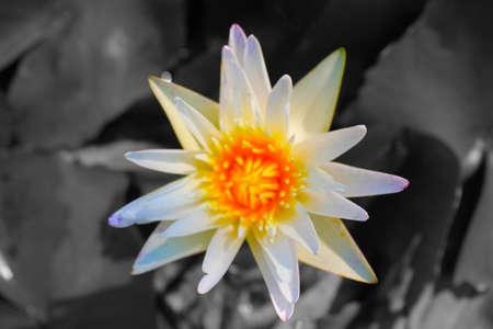 bloom: bloom Stock Photo