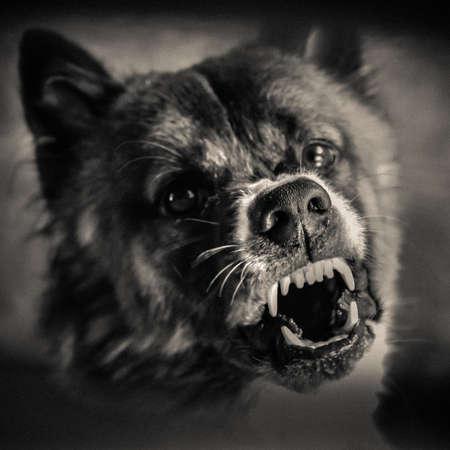 Gevaar Hond