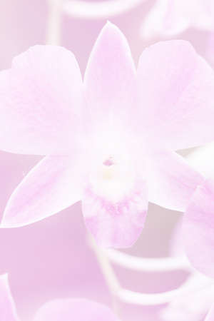 Beautiful Background with Orchid Flower in Pink Color Theme.