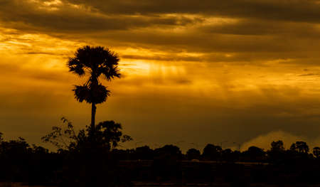 Sunset sky landscape.