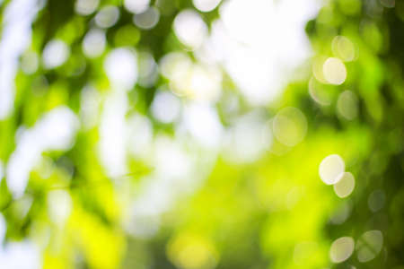Abstract green blurred bokeh background.