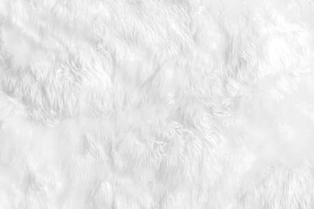 Close Up animal white wool sheep background in top view light natural detail, grey fluffy cotton texture. Wrinkled lamb fur coat skin, rug mat raw material, fleece woolly textile concept