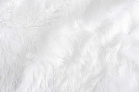 Closeup animal white wool sheep background in top view light natural detail, grey fluffy seamless cotton texture. Wrinkled lamb fur coat skin, rug mat raw material,  fleece woolly textile concept