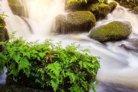 soft waterfall with green plant on the rock rainy season,Mun Daeng Waterfall at Phu Hin Rongkla National Park, Thailand