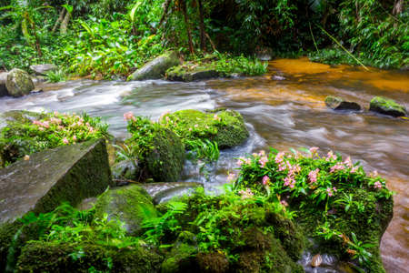 fresh green plant and pink flower on rock in middle Mun Dang Waterfall rain season in Thailand Stock Photo