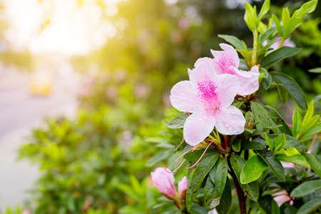 shurb: fresh pink flower Close up  shot in public park