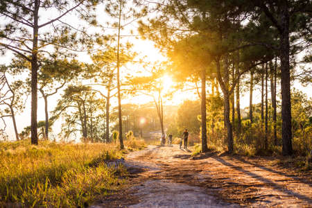 people carry bike along  trail way with sunset in jungle