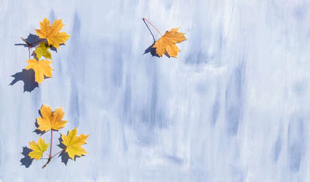 Autumn maple leaves on a blue background with space for text. Template, poster. Stock Photo